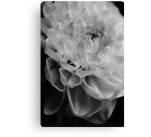 flower close up - black/white - nine Canvas Print
