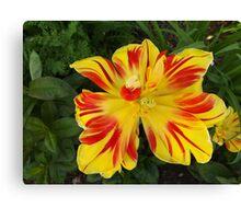 Jersey City, New Jersey, Flower Close-Up Canvas Print