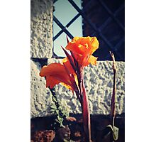 Canna indica #1 Photographic Print