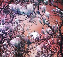 Dreaming of Magnolias by Shawna Rowe