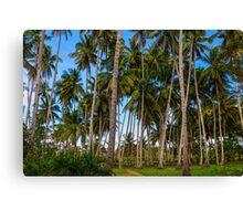 Coconut Jungle Paradise Canvas Print
