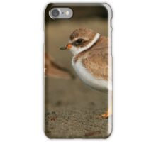 Semipalmated Plover iPhone Case/Skin