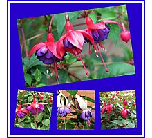 Dancing Fuchsia Belles - Summer Flowers Collage Photographic Print