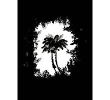 Treeferns Photographic Print