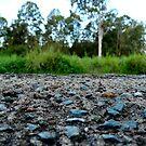 The rocks that flourished by AleksCanard