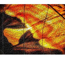 Hot Wing Photographic Print