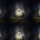 Bird - Spatz by fuxart