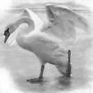 Lonely Swan by flashcompact