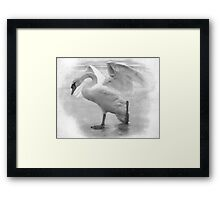 Lonely Swan Framed Print