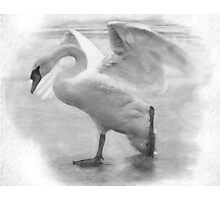Lonely Swan Photographic Print