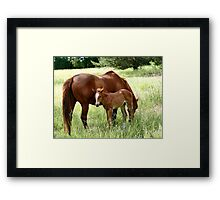 Mother And Foal - Christchurch Framed Print