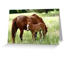 Mother And Foal - Christchurch Greeting Card