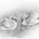 Two Swans by flashcompact