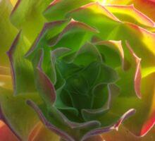 Backlit Succulent Sticker