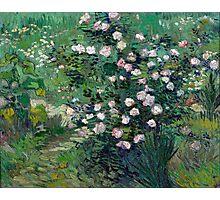 1889-Vincent van Gogh-Roses-33x41,3 Photographic Print