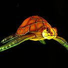 Floating Turtle by kostolany244