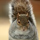 Squirrel by Bine