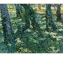 1889-Vincent van Gogh-Undergrowth-73x92,5 Photographic Print