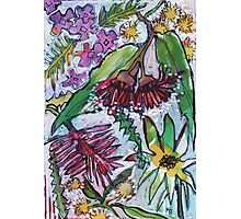 Australian Wildflowers Photographic Print