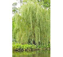 Weeping Willow by the Pond  Photographic Print