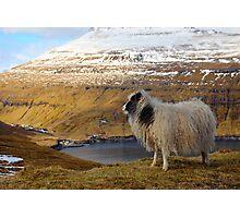 Wildlife in wintertime  Photographic Print