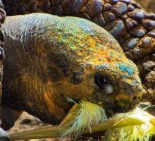 Amaru Galapagos Giant Tortoise Sticker