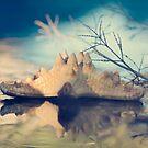 Starfish by Tamara Al Bahri
