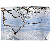 Tree branches on a winter landscape. Poster