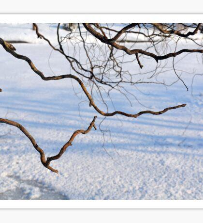 Tree branches on a winter landscape. Sticker