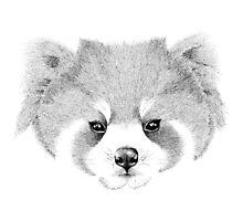 The Red Panda Photographic Print