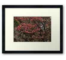 Pink Spring - Dogwood Filigree and Lace Framed Print