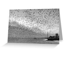 Starlings over West Pier Greeting Card