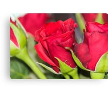 Roses are red... Canvas Print
