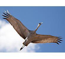 Crane Overhead Photographic Print