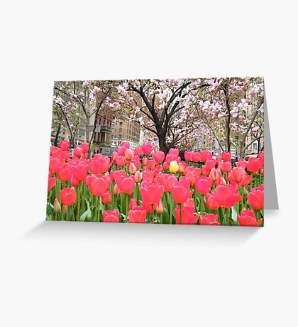 Colorful Spring Tulips, New York City Greeting Card