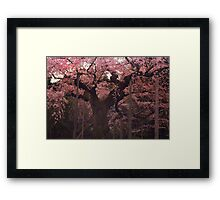 Japanese Cherry Blossoms in Spring Framed Print