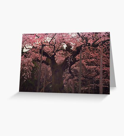 Japanese Cherry Blossoms in Spring Greeting Card