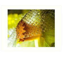The Demure Daffodil Art Print