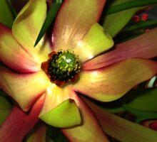 Liquify Aussie Protea Flora Sticker