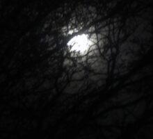 Moonlit Forest Sticker