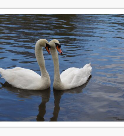 Swans on the lake Sticker