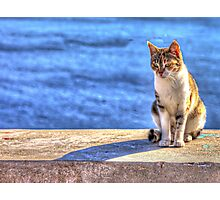 Cat Watch Photographic Print