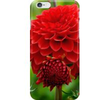 Mother & Child Red Dahlia - Southland - NZ iPhone Case/Skin