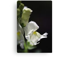 White Snapdragon Flower Canvas Print