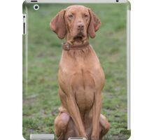 Portrait of a Hungarian Vizla dog iPad Case/Skin