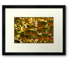 Slowly Changing Dimension - Hot Vibrant Leaf Edges Celebrating the Arrival of Autumn Framed Print