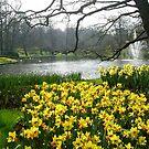 Daffodils in the Keukenhof by Arie Koene