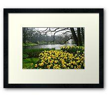 Daffodils in the Keukenhof Framed Print