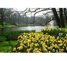Daffodils in the Keukenhof Photographic Print