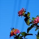 Sky Flowers by AleksCanard